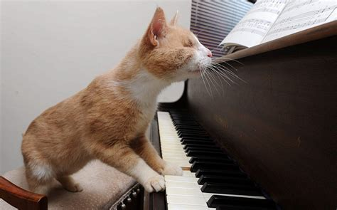 Stevie Wonder the blind piano-playing cat who loves to