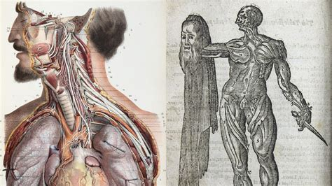 These rare medical illustrations detail how we've viewed